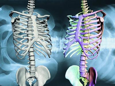 骨骼活动的标志物